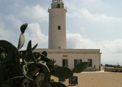 Formentera faroo